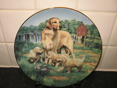 Golden Retriever Dog  Plate   - Classic Sporting Dogs   -    Hamilton