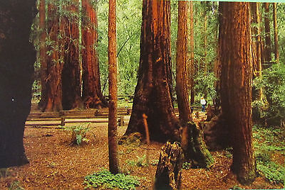 USA Postage Stamps on Postcard Muir Woods National Monument