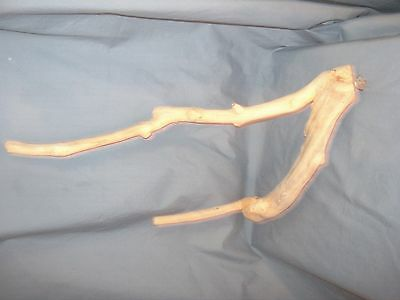 LARGE BIRD NATURAL JAVA WOOD PERCH - Multiple Branches