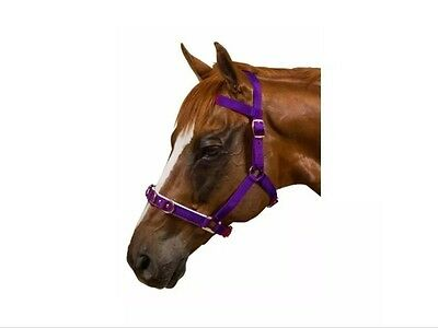 Kincade lunge lunging cavesson padded purple cob size new with tag bnwt