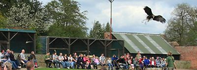 Falconry UK Thirsk Bird of Prey centre 2 for1