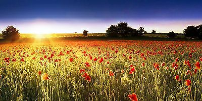 High quality panoramic Poppy Field  Sunset Canvas Print
