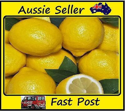 Rare Natural Sweet Yellow Lemon Tree Indoor Outdoor Seeds Fruit Plant Seed 10pcs