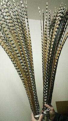 Wholesale Original 10/50pcs natural Reeves's Pheasant feathers 4-64inch/10-160cm