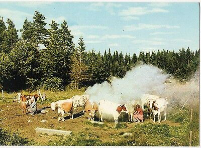 Finland - Milking ~An Old Postcard (7G16)