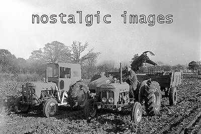 Photo  Taken From A 1964 Image Of Sugar Beet Harvesting In Suffolk
