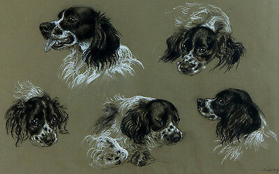 Vere Lucy Temple - 1939 Charcoal Drawing, Studies of a King Charles Spaniel