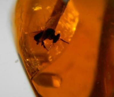 Amber Dominican Republic Fossil StingLess Bee Insect 3.6g Pendant Stone