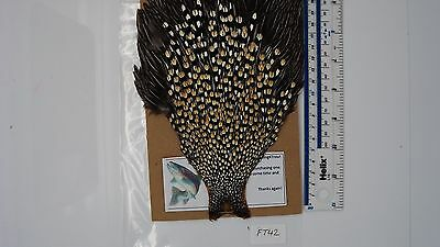 Jungle cock cape, Grade AA, fly tying feathers ( FT42 )