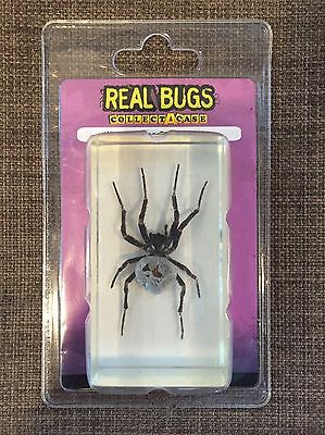 Real Bugs Collect A Case Japanese Garden Spider #17 New in Package