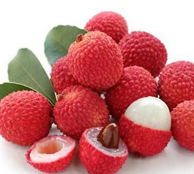 Lychee Tree Seeds 10 Pcs Lichi Fruit Tree Seeds  Litchi Seed Liechee Liche Lizhi
