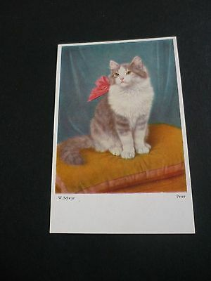 W.SCHWAR CAT Postcard 1124, Peter