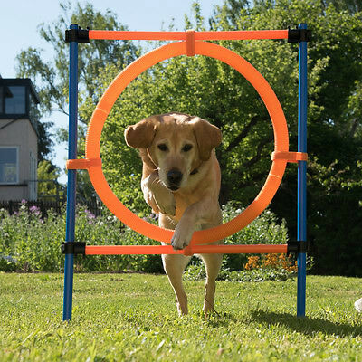 Dog Jump Hoop Agility Set Training Equipment Obedience Ring Show Crufts Poles