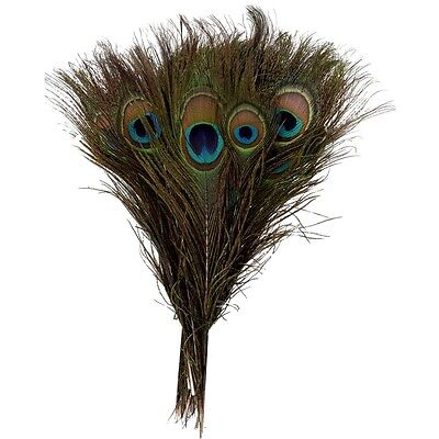 5 pcs peacock feather millinery scrapbooking craft eye natural #535