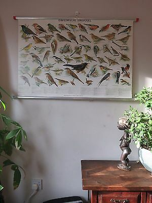 Vintage Pull Roll Down School Wall Chart Poster Of Songbirds Ornithology Birds.
