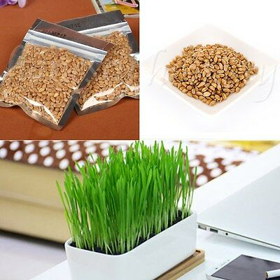 30g Organic Wheatgrass Wheat Grass Grain Sprouting Cat Seeds Grass Healthy Food