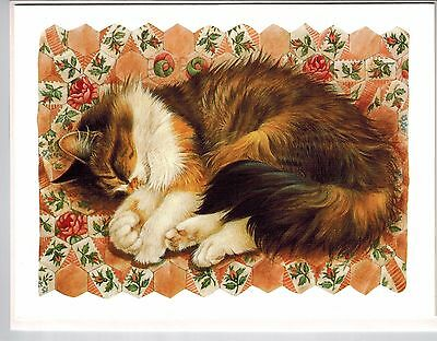 New 4 Lesley Anne Ivory Cat Agneatha On Rose Hexagons Blank Greeting Note Cards