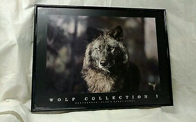 Wolf Collection I Wolf Print