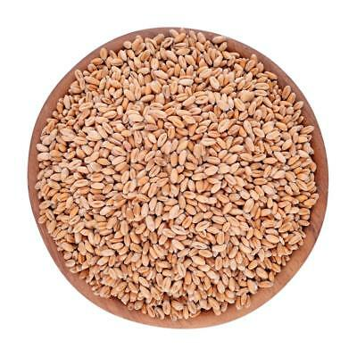 Our Organics Wheat grain 3kg THIS PRODUCT IS NOT GLUTEN FREE