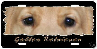 "Golden Retriever   ""The Eyes Have It "" Auto License Plate"