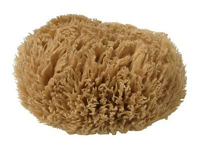 Unbleached Brown Fino Silk Natural Greek Sea Sponge 5.5'' Large size Adult bath