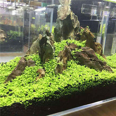 Nice Aquarium Grass Seed Aquatic Mini Leaf Carpet Water Plant Fish Tank Decor CA