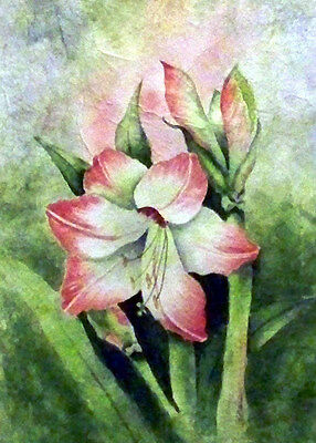 Aceo ATc Pretty Amarylis Flower print of  Original watercolor painting