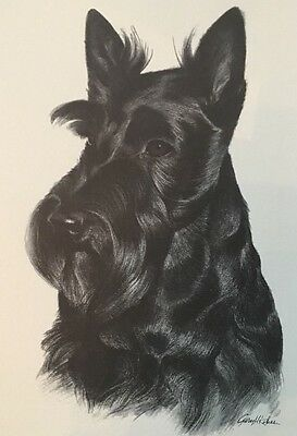 Scottish Terrier Portrait Print Show Dog Hand Drawn In Charcoal 1950, 11x14