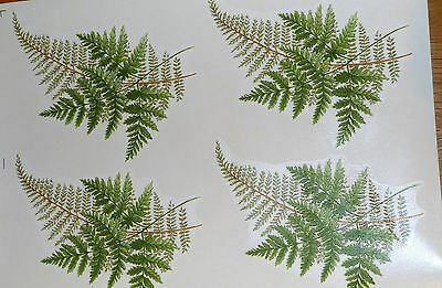 CERAMIC DECALS FERNS 646213 18 cm X 13 cm 4 LARGE  RIGHT PRICE