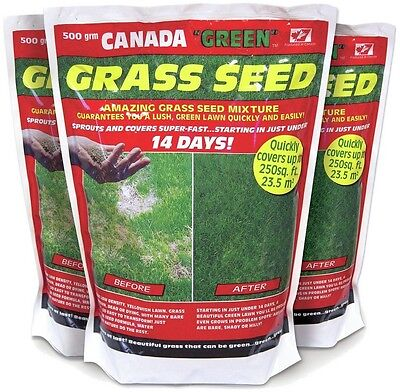 Canada Green Grass Seed Pack - 500g - Buy 2 Get 1 Free