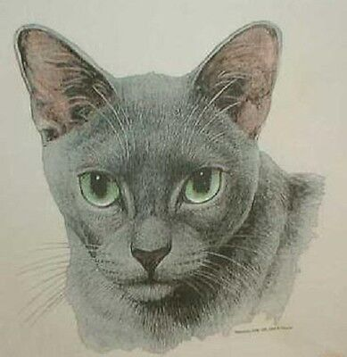 Russian Blue cat   ash gray or pink T-shirt. New! Your Size!!