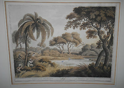 ANTIQUE 19th c AQUATINT PEACOCK SHOOTING - HOWETT WILLIAMSON MERKE ORME 1805