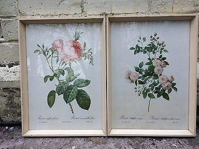 2 x Vintage P J Redoute Framed Prints Botanical Roses French Remond Retro 1960s