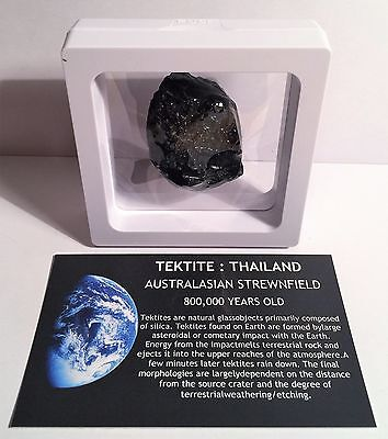 """RARE"" 22.3 Gram TEKTITE Museum Quality with stand and label"
