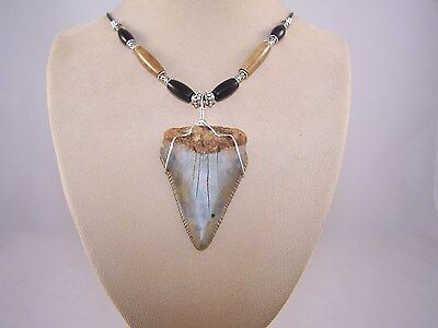 2.24 Inch GREAT WHITE Fossil Shark Tooth Necklace
