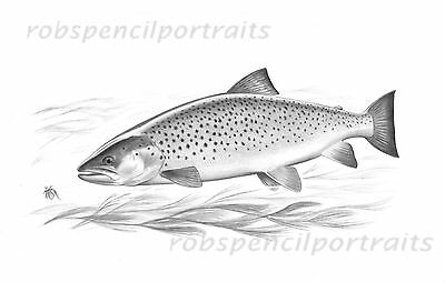 SEA TROUT Fly Fishing Drawing Game Art Drawing Print Gift For Fisherman Angler
