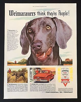 1950 Conoco Motor Oil Weimaraner Advertisement Smartest Dog Print Vintage AD
