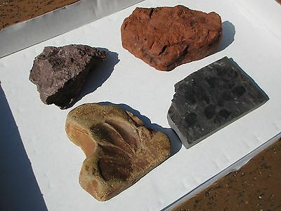 Assorted Aussie FOSSILS - Plant, Leaf  - Various Locations 1.6 kilo   NICE!!