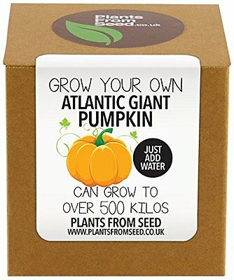 Plants From Seed  Grow Your Own Giant Pumpkin Kit