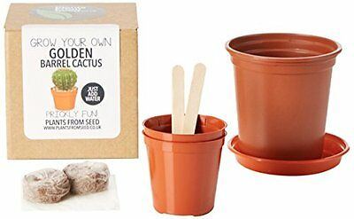 Plants From Seed  Grow Your Own Golden Barrel Cactus