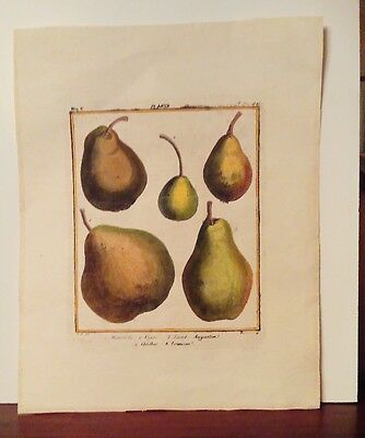 Antique Pen and Ink Bookplate large Print Varieties of Pears Fruit