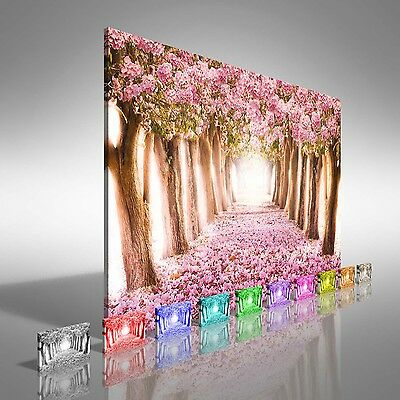 Romantic Tunnel Of Pink Flower Trees Canvas Print Large Picture Wall Art