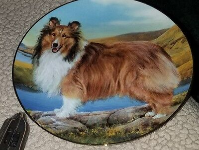 collectible plate with Shetland sheepdog