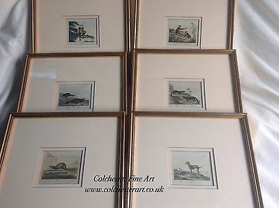 Set of Six Framed (Buffon)? 18th c. Coloured Engravings of Animals