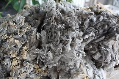 Wool Natural Colour Wool Light/Med Grey18-20 micron 1.90kilos Raw wool