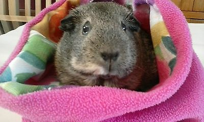 Chucklebunnies Guinea pig Cuddle bed pocket for 1, pink fleece, gorgeous flowers