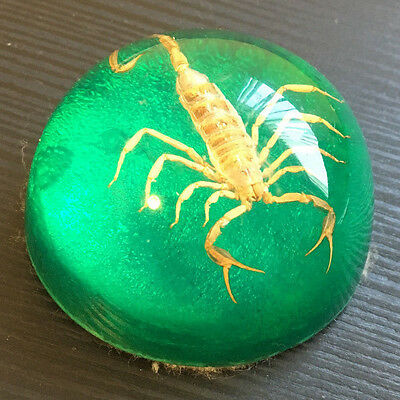 Real Scorpion Desktop Paperweight Genuine Insect In Lucite