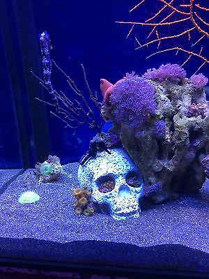 Marine artificial live rock reef coral tank aquarium functional porous skull