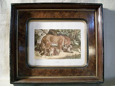 """Antique  """"burled"""" Wood & Gold Frame With Antique Chromolithograph Leopard Print"""
