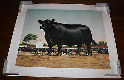 Vintage 1961 American Angus Association Aberdeen Steers Calf Cow Lot of 3 Poster